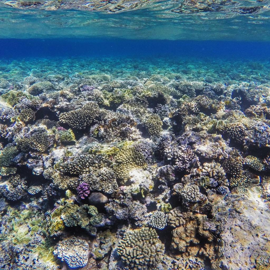 The vibrant coral reef which can be found near Dahab in Egypt